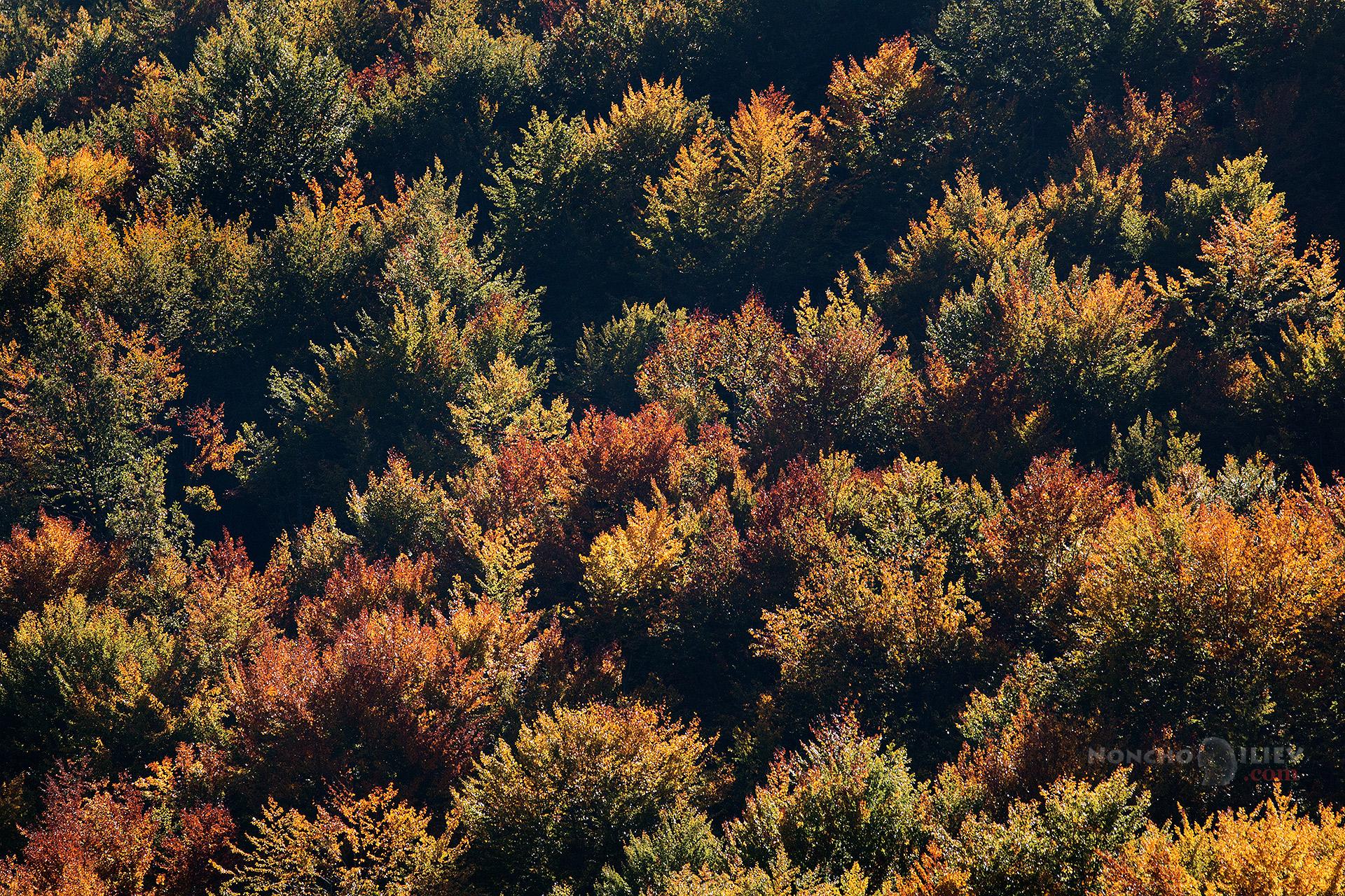 Златна есен Родопи