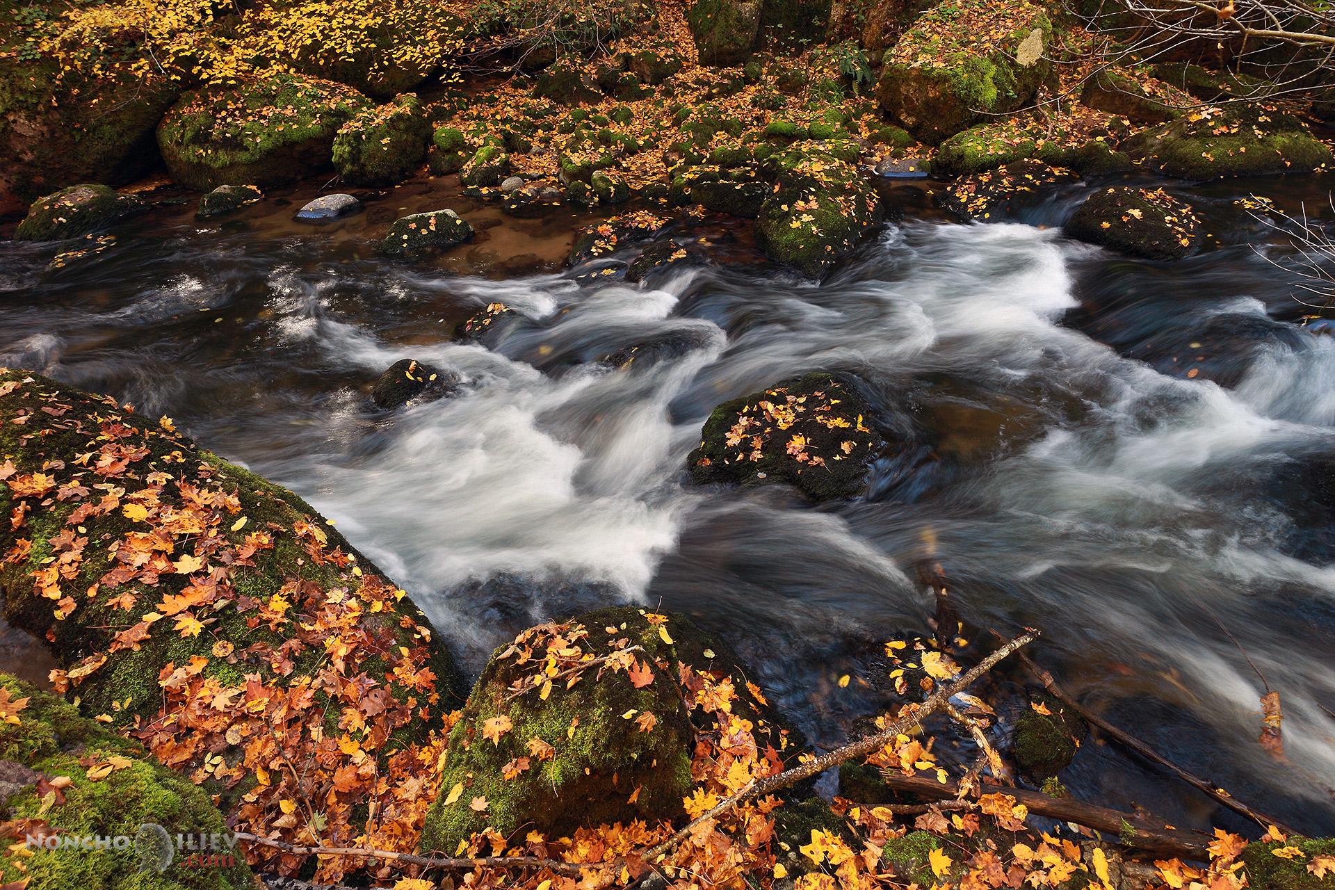 Златна река Родопи
