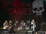 SAM_3360_TheDeadDaisies