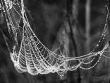 Бисерната люлка на паяка