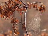 Събиране на есенни лъчи