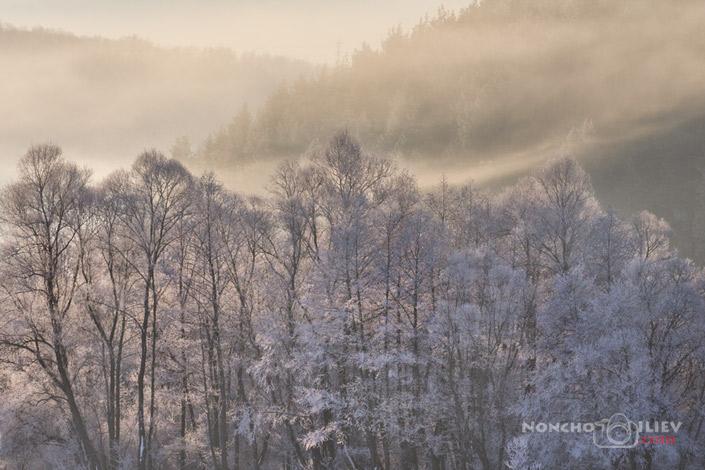 Замръзнало поле по изгрев