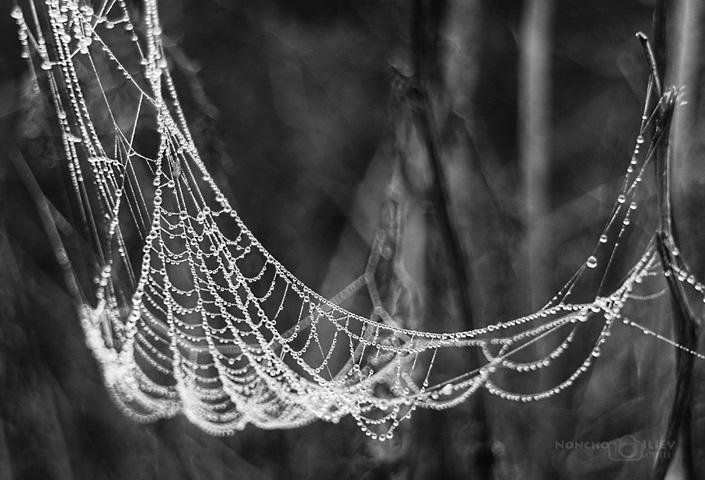 Бисерна паяжина