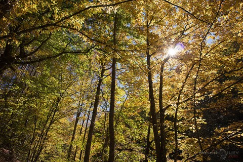 Златна есен в Родопите