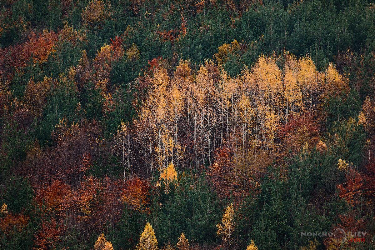 Фото Форум Фест 2014 есен