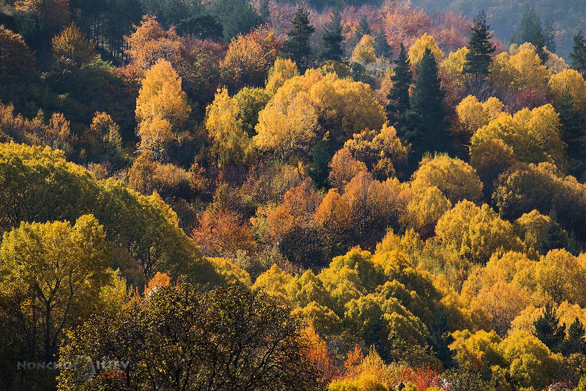 Фото Форум Фест 2014 есен в Ковачевица