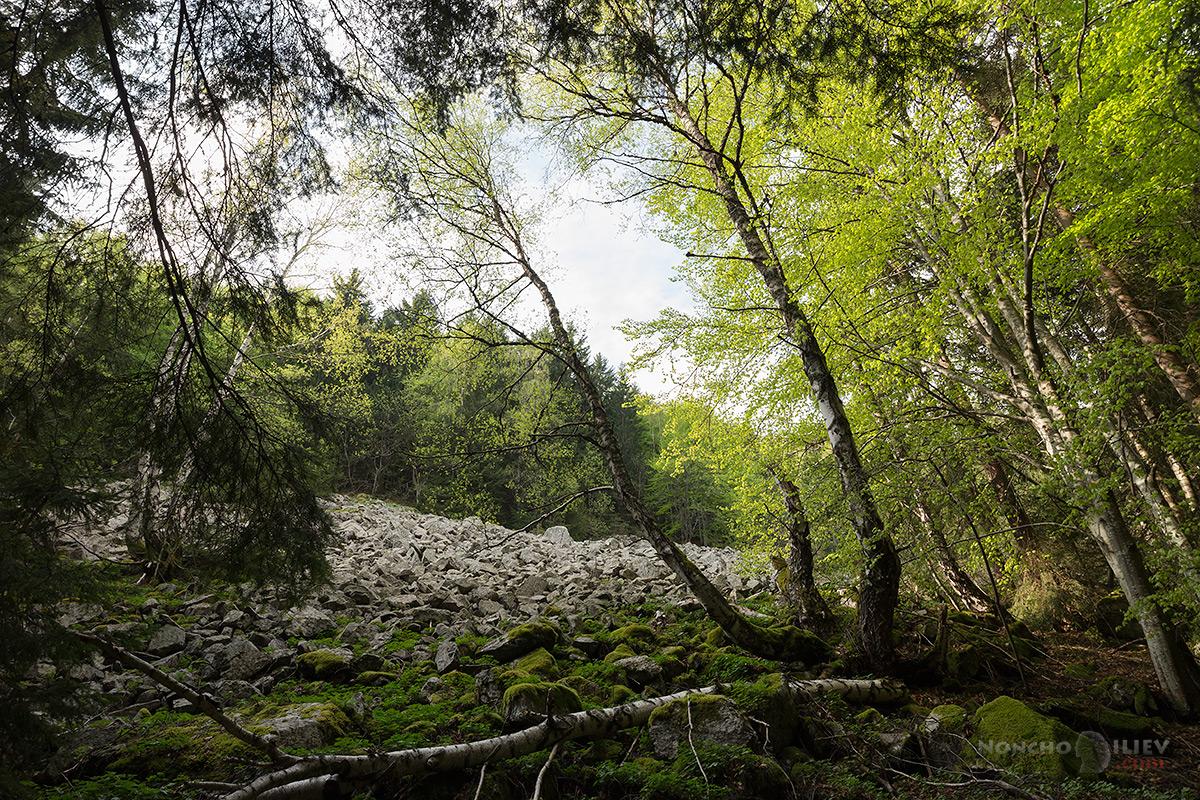 Витоша, резерват Бистришко бранище