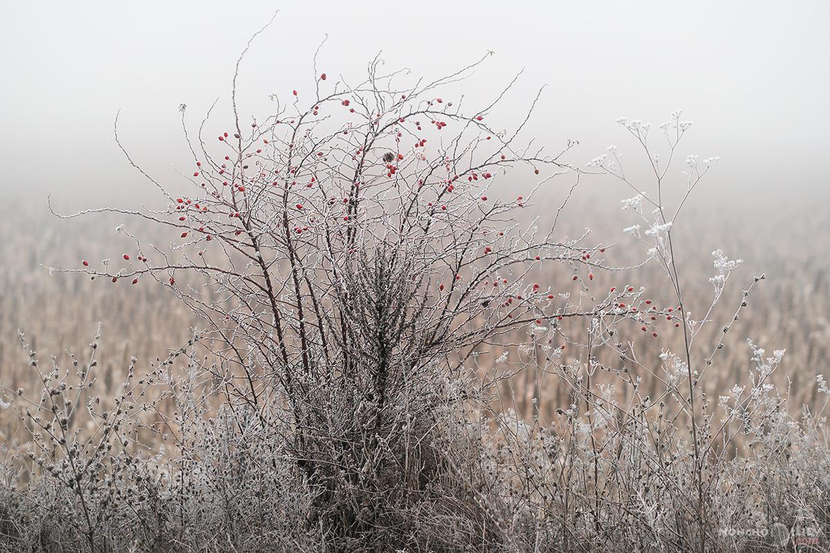 скреж шипки храст лед