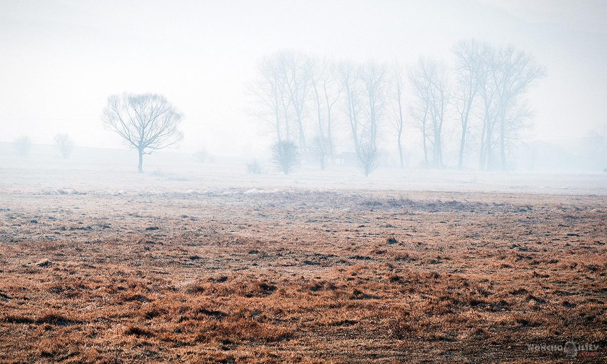 дървета поле мъгла