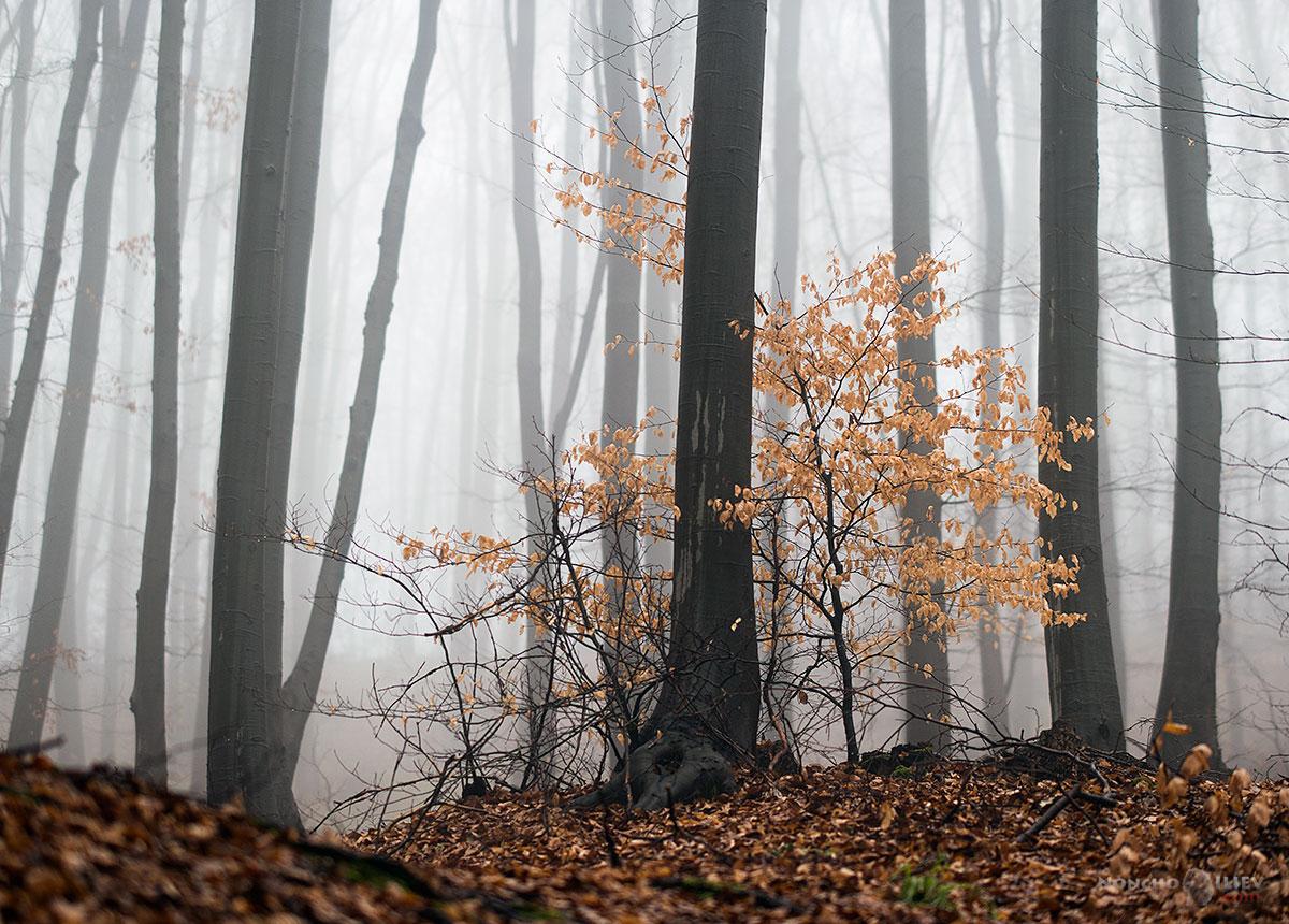 март есен