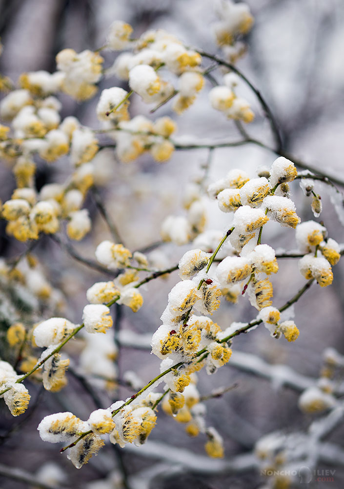 март зима сняг цвят
