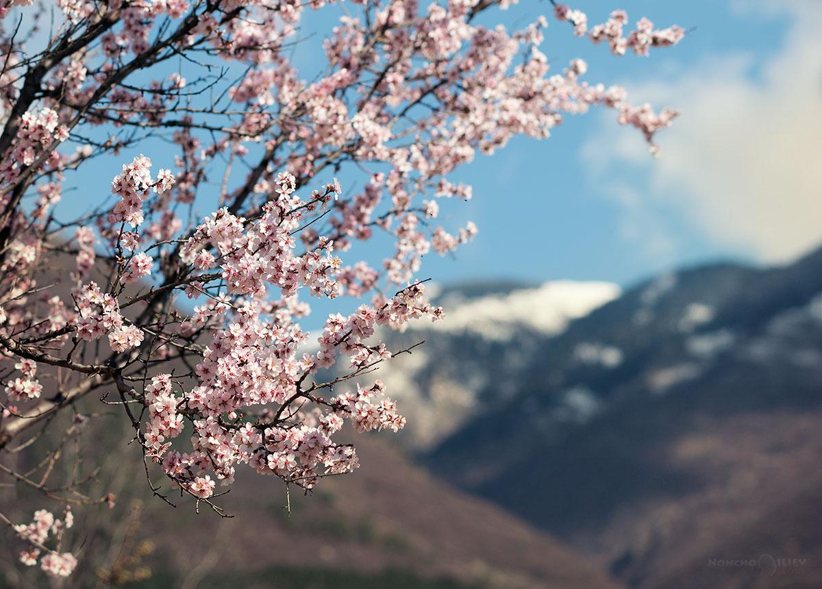 март пролет цвят