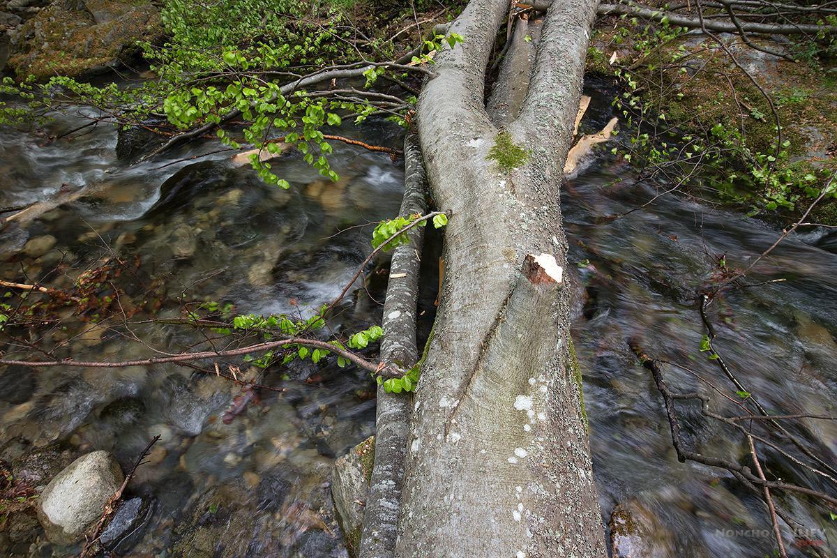 дърво през реката