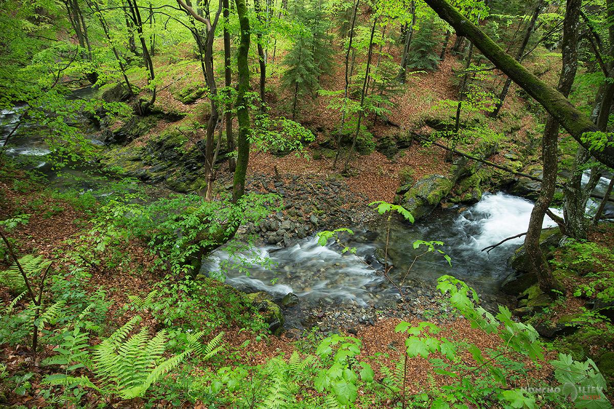 пролет дъжд гора