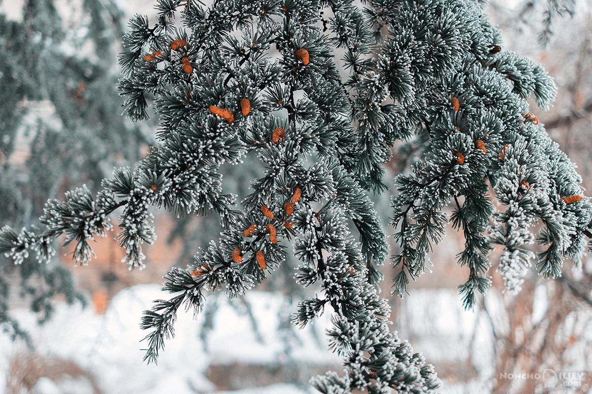 януари студ