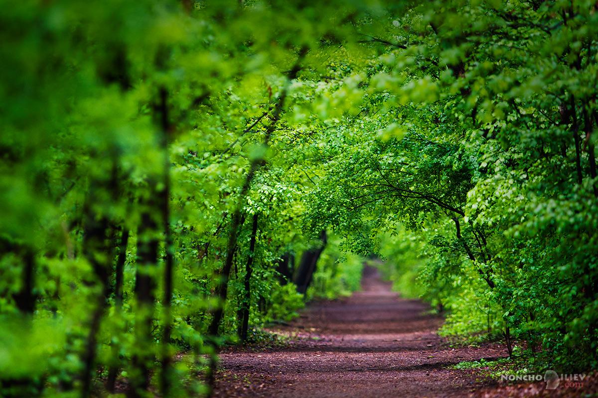 Зелено в парка